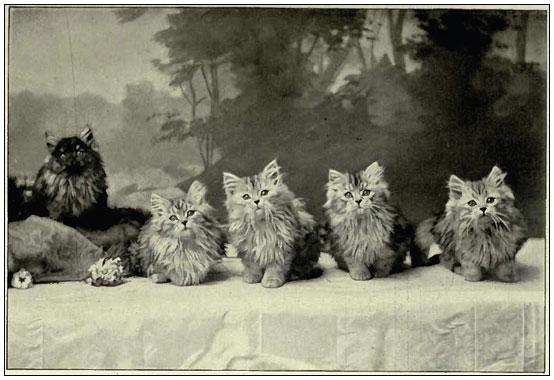 Персидские котята 1900 год, источник THE BOOK OF THE CAT