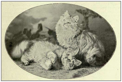 Персидские кошки 1900 год серебристые табби, источник THE BOOK OF THE CAT